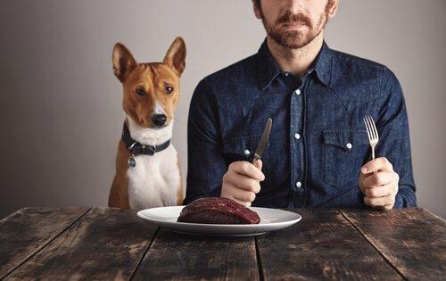 L'importanza delle proteine per il cane