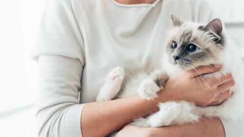 Scopriamo le razze di gatto più affettuose