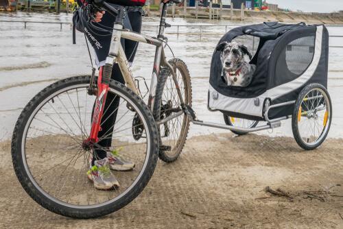 Rimorchio da bicicletta per portare a spasso il cane