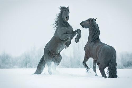 Scopriamo insieme un cavallo preistorico congelato