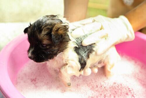 Fare il bagno ad un cucciolo