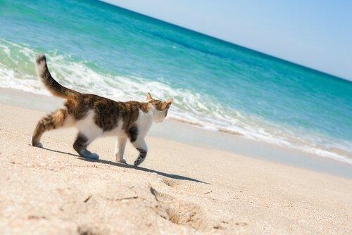 Esistono spiagge per gatti in Italia? Ebbene sì!