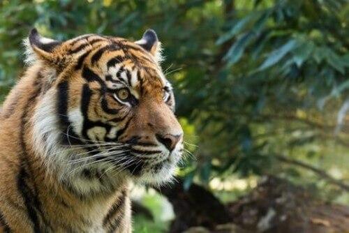 La fauna dell'isola di Sumatra
