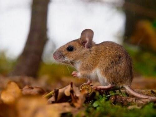 Cosa sono i feromoni e come agiscono sugli animali?