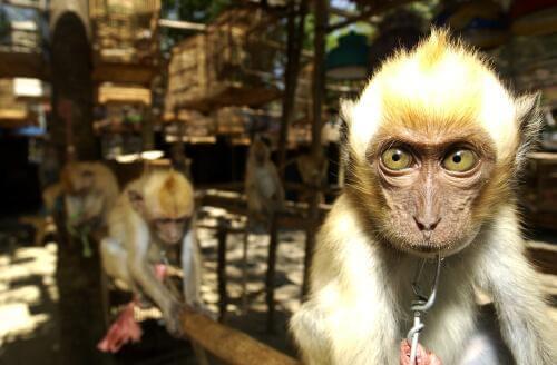 Spagna: la porta per il traffico illegale di animali in Europa