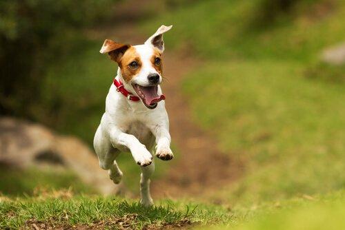 Cane salta addosso alle persone