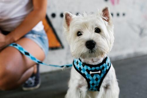 Cose che i cani odiano di voi: il collare
