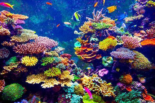 pesci nella barriera corallina