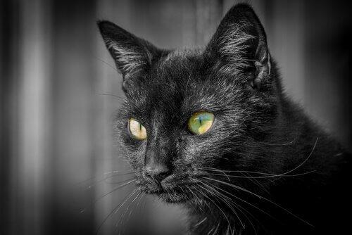 Impariamo qualcosa in più sugli occhi dei gatti