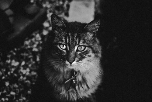 Visione notturna nei gatti