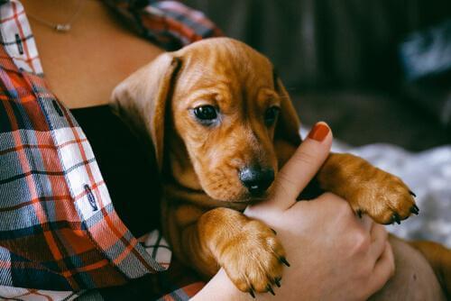 Addestramento di base per un cucciolo