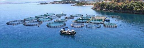 Allevamento dei pesci