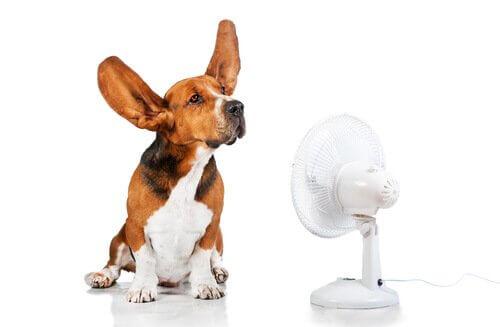 Cane davanti al ventilatore