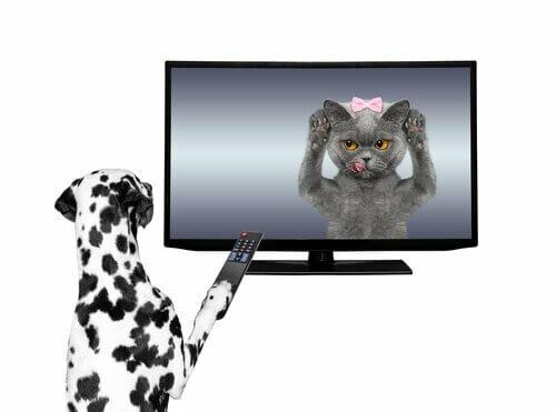Gli animali negli spot televisivi