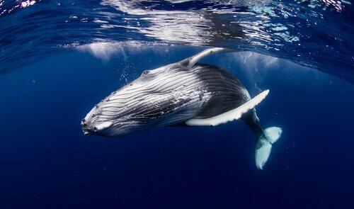 Curiosità sulle balene