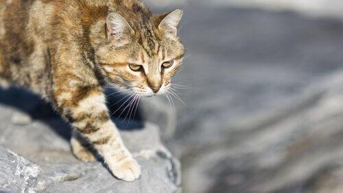 La caccia dei gatti