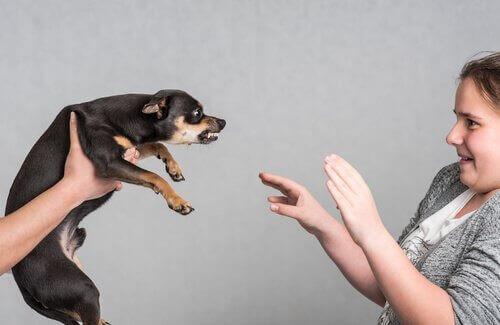 Cagnolino nero aggressivo