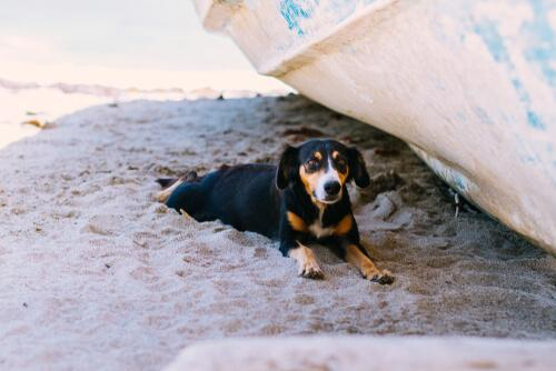 Cane all'ombra in spiaggia