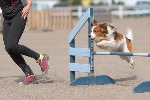Cane che salta ostacolo con padrona
