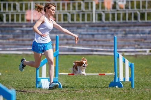 Cane che viene addestrato a saltare ostacolo