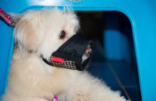 Cane con museruola nella gabbietta
