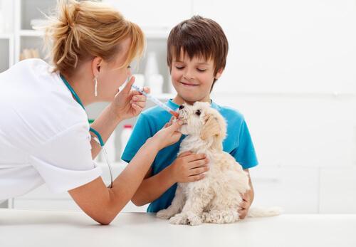 Cane dal veterinario con bambino