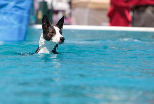 cane dentro acqua piscina
