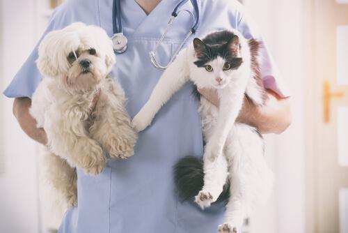 Cane e gatto in braccio al veterinario