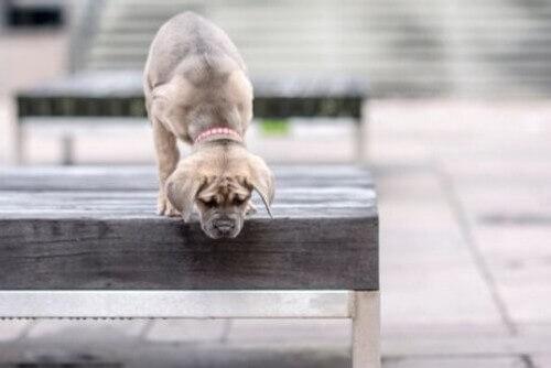 I cani soffrono di vertigini?