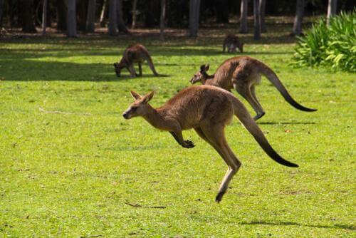 Animali in Australia, specie incredibili