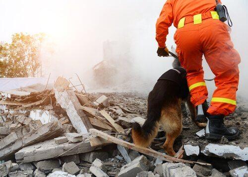 Cane e soccorritore in mezzo alle macerie