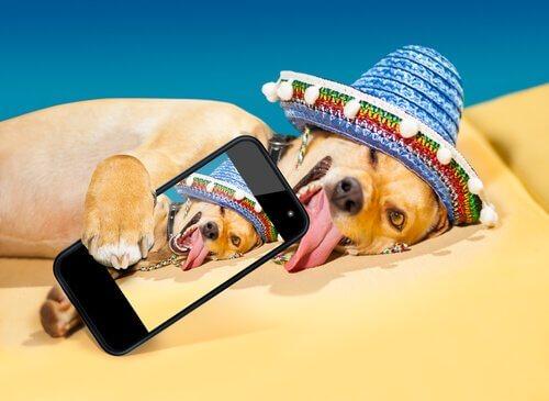 Come far diventare famoso il vostro cane su Instagram