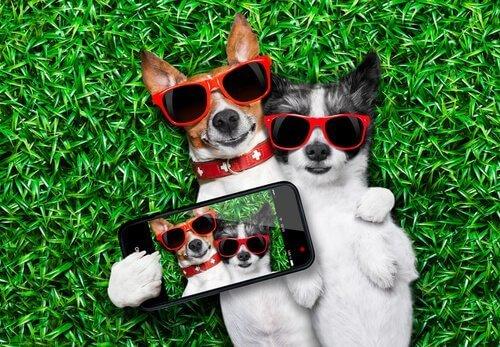 I cani più famosi su Instagram