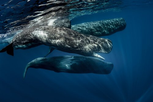 Scopriamo insieme le caratteristiche dei cetacei