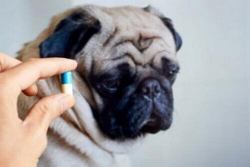 Si possono dare gli antibiotici agli animali?