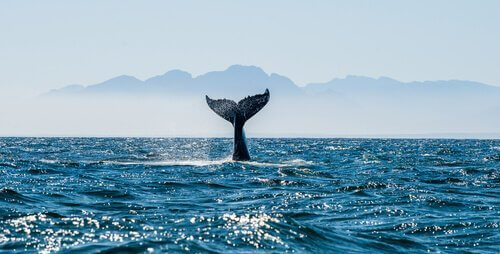 Conosciamo insieme i cetacei del Mediterraneo