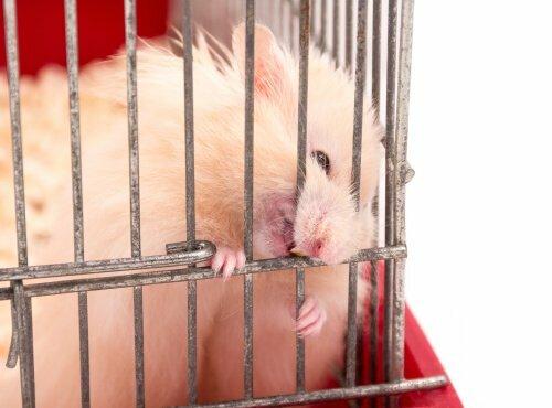 Come evitare che il criceto morda la gabbia