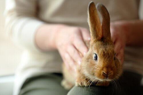 Consigli per adottare un coniglio come animale domestico
