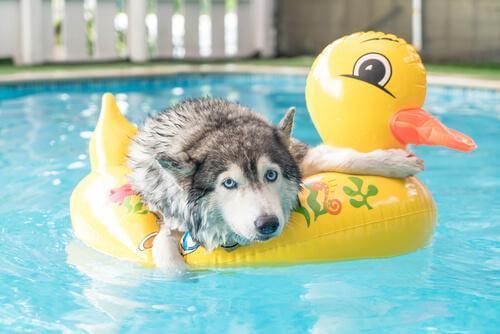 Consigli per giocare con il cane in estate