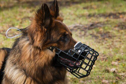 Consigli per scegliere la museruola per il vostro cane
