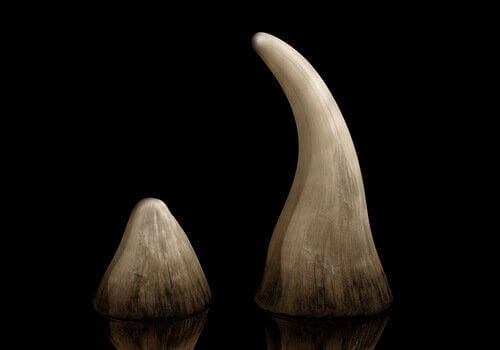 Corni di rinoceronti