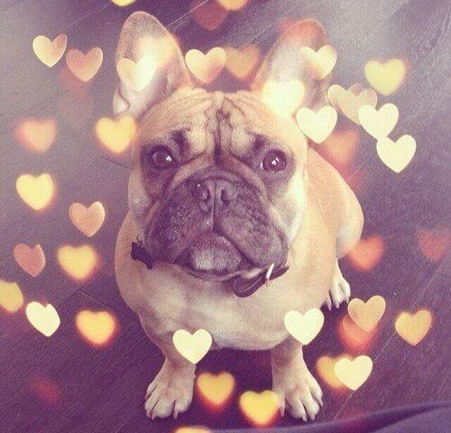 Cane cuoricini instagram