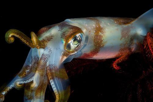 Le differenze tra il calamaro e la seppia