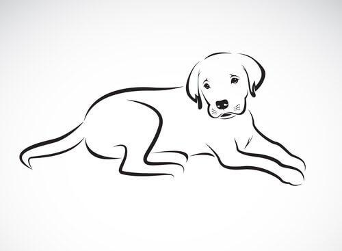 Come dipingere il cane