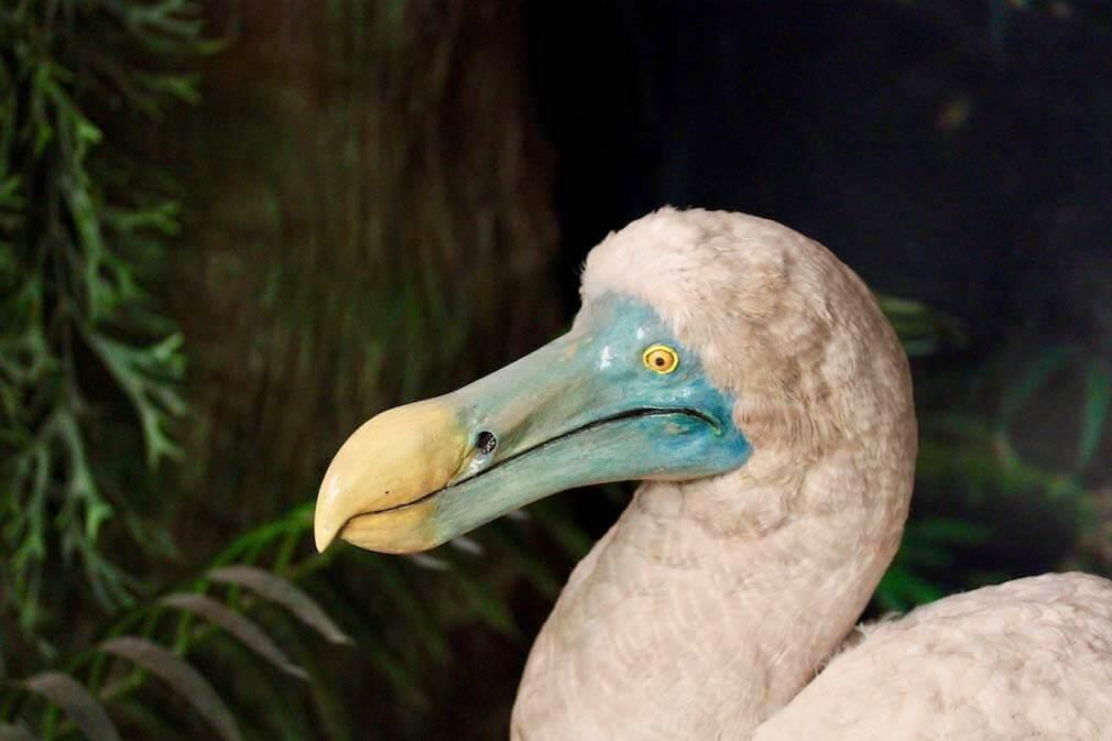 Rappresentazione dodo