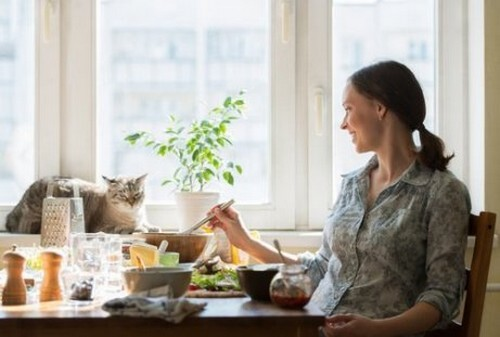 Le migliori ricette per i gatti più esigenti