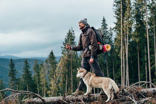 Consigli per fare escursioni con il cane