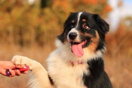 Far esercitare ed educare un animale con semplici attività