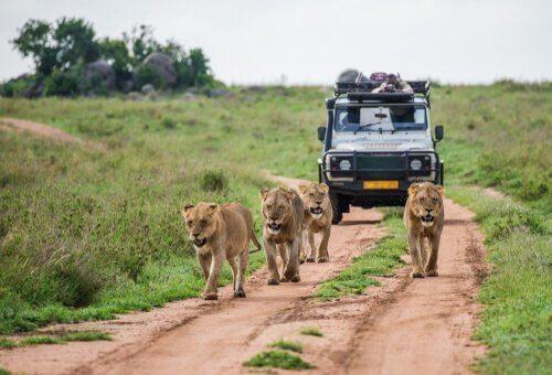 Fare un safari