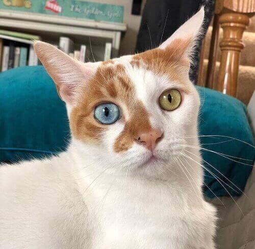 gatti di instagram